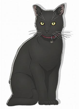 Герой Чёрная кошка 04.01.21